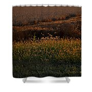 Sunrise On Wild Grasses II Shower Curtain