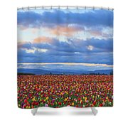 Sunrise Over A Tulip Field At Wooden Shower Curtain