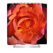 Sunrise Rose Shower Curtain