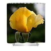 Sunrise Rosebud Shower Curtain