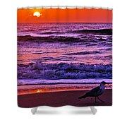 Sunrise Sea And Seagull Shower Curtain