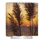 Sunset On The Mediterranean Sea And Plant Shower Curtain