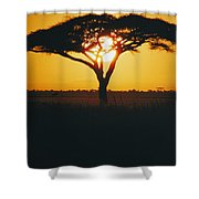 Sunset And Trees, Serengeti Plains Shower Curtain