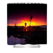 Sunset Cat Tail Shower Curtain