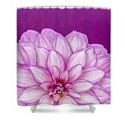 Sunset Dahlia 3 Shower Curtain
