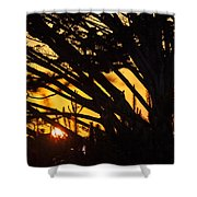 Sunset In The Trees Shower Curtain