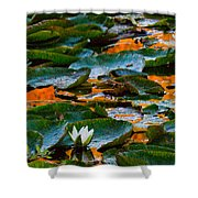 Sunset On A Lily Pond Shower Curtain