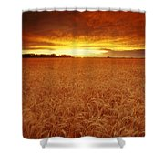 Sunset Over Wheat Field Shower Curtain