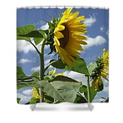 Sunshine Flowers Shower Curtain