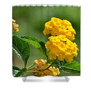 Sunshine Gold Shower Curtain