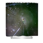 Sunshine On Swamp Spider Shower Curtain
