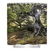 Sunstar Oak Shower Curtain