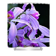 Super Orchid Shower Curtain