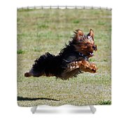 Super Yorkie Shower Curtain