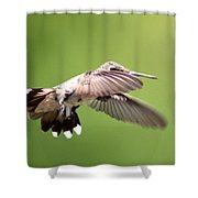 Sure Shy Shower Curtain