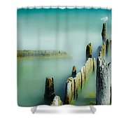 Surreal Sea Gull Shower Curtain