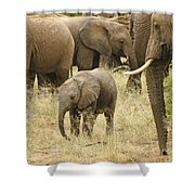 Surrounded By Family Shower Curtain