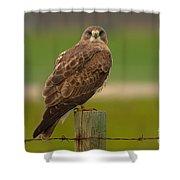 Swainsons Hawk Shower Curtain