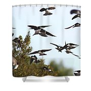 Swallows - All In The Family Shower Curtain