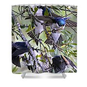 Swallows In Pooler Shower Curtain