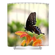 Swallowtail - Lite And Lively Shower Curtain