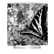 Swallowtail Butterfly And Plum Blossoms Shower Curtain