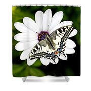 Swallowtail Butterfly Resting Shower Curtain