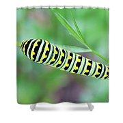 Swallowtail Caterpillar On Parsley Shower Curtain