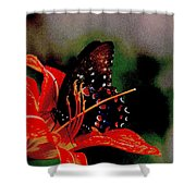 Swallowtail On Orange Shower Curtain