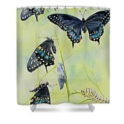 Swallowtail Story Shower Curtain