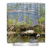 Swamp Shower Curtain