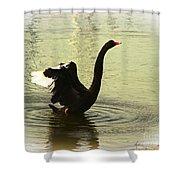 Swan Dance 3 Shower Curtain