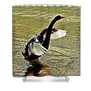Swan Dance Shower Curtain
