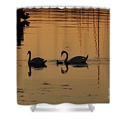 Swan Family At Sunset Shower Curtain by Camilla Brattemark