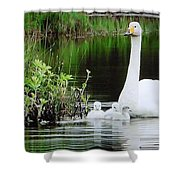 Swan Family Late Summer Shower Curtain