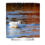 Swan Gold And Blue Shower Curtain