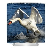 Swan In Action Shower Curtain