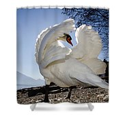 Swan In Backlight Shower Curtain