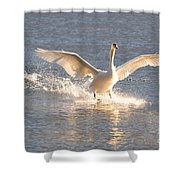 Swan Landing Shower Curtain