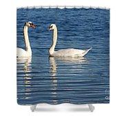 Swan Mates Shower Curtain by Sabrina L Ryan
