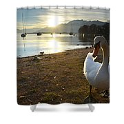 Swan On The Beach Shower Curtain