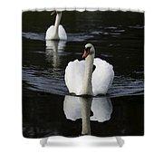 Swan Pair 2 Shower Curtain