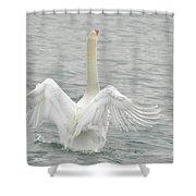 Swan Shower Curtain