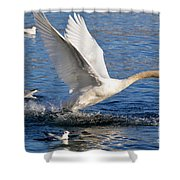 Swan Take Off Shower Curtain