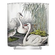 Swans, C1850 Shower Curtain by Granger