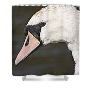 Swan's Head Shower Curtain