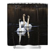 Swans In A Row Shower Curtain