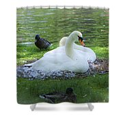 Swans In Nest Shower Curtain