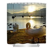 Swans In Sunset Shower Curtain