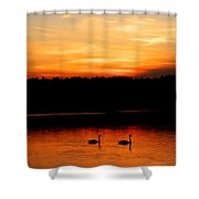 Swans In The Sunset Shower Curtain